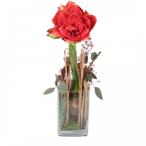 Lady in Red (Amaryllis in Vase)